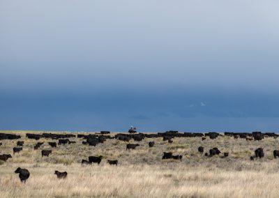 noble herd