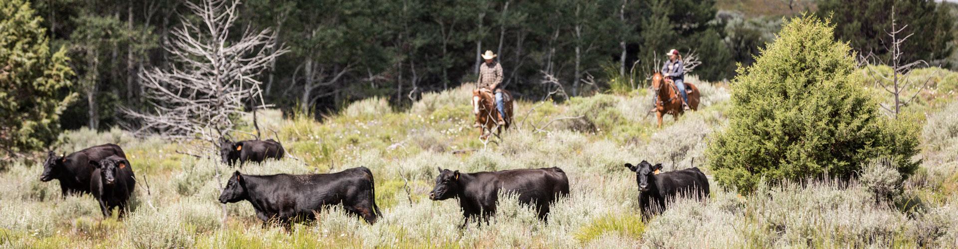 Morgan Ranches