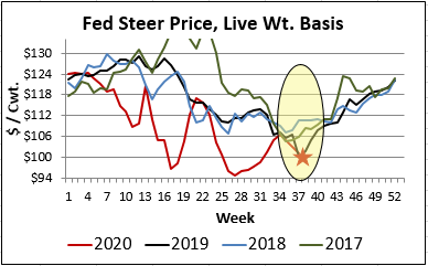 fed steer live wt price