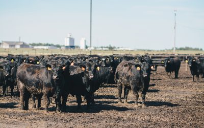 Beef cuts reposition at retail