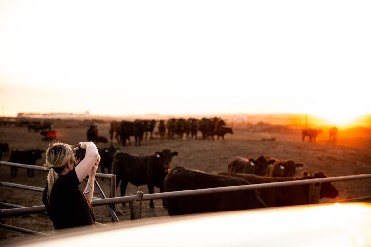 taking pictures at the feedyard