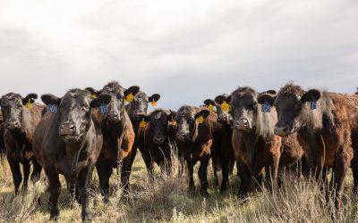 Beef's paradigm shift should continue, Rishel says