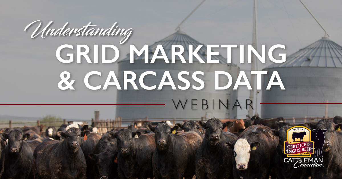 grid marketing and carcass data graphic